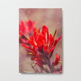 Indian Paintbrush Wildflower Metal Print