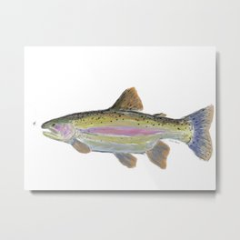 Rainbow Trout & Fly Metal Print