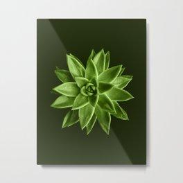 Greenery succulent Echeveria agavoides flower Metal Print