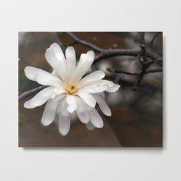 Magnolia I Metal Print