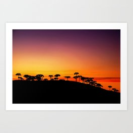 Araucaria Sunset Art Print
