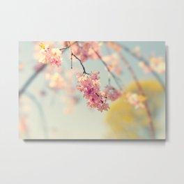 Blossoms. Metal Print