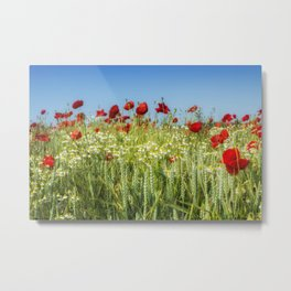 Wheat Field Poppies Metal Print