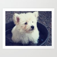westie Art Prints featuring Westie by Courtney E Photography