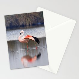 Chilean Flamingo (Phoenicopterus chilensis) Stationery Cards