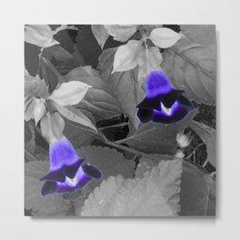 torenias with purple blooms Metal Print