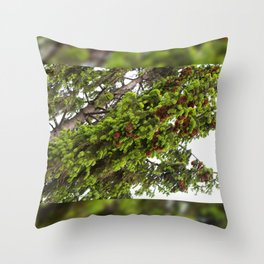 Large spruce fresh shoots Throw Pillow