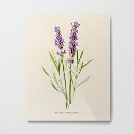 Vintage Lavender Botanical Illustration Metal Print