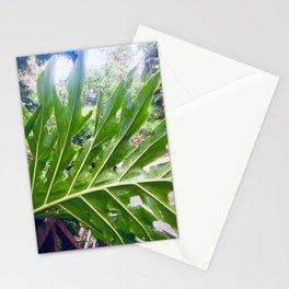 Sunlit Monstera Leaf Stationery Cards