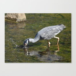 Taking the Plunge Canvas Print