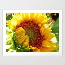 Sunflower design Art Print