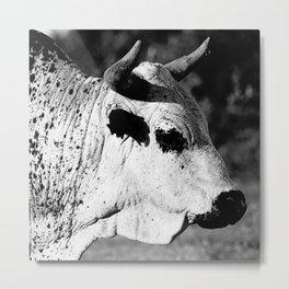 nguni bull 01 Metal Print