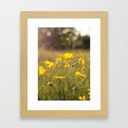 Wild Flowers | Buttercups Framed Art Print