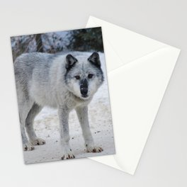 Lone wolf of the Canadian Rocky Mountains Stationery Cards