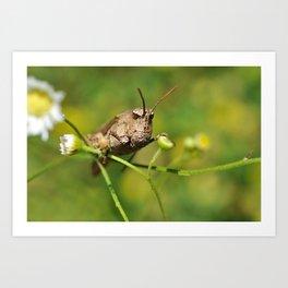 Buzz Lightyear (Grasshopper Face) Art Print