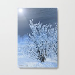 Hoar Frost on the Lilac Bush Metal Print
