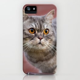 British shorthair cat on the wall iPhone Case