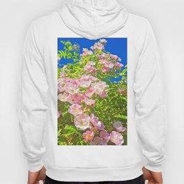 Sun Soaked Roses Hoody