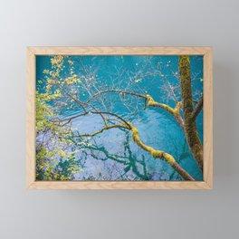Amazing colors of mossy tree and deep lake at Jiuzhaigou Park Framed Mini Art Print