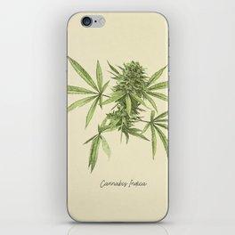 Vintage botanical print - Cannabis iPhone Skin