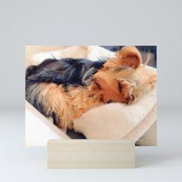 Sweet Dreams Little Yorkie | Nadia Bonello Mini Art Print