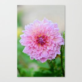 Dahlia Decadence Canvas Print