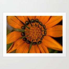 Pumpkin Petals Art Print