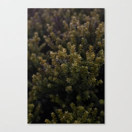 Tongariro Alpine Crossing Canvas Print
