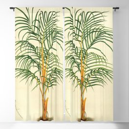 Handcoloured  lithograph antique french vintage-1800s Blackout Curtain