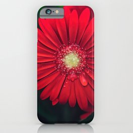 Red Daisy #Gerberas iPhone Case
