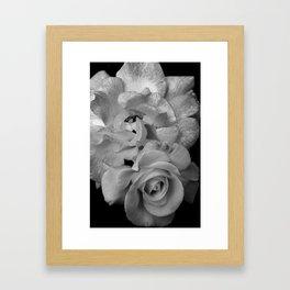 Alabaster Roses Framed Art Print