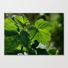Leaves in the Sun Canvas Print