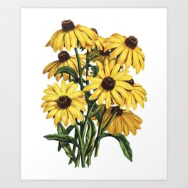 Black-Eyed Susan Yellow Flowers Painting Art Print