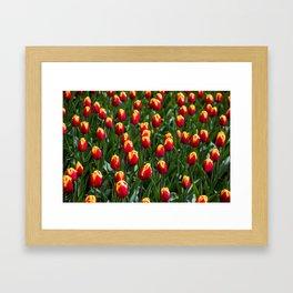 Red Tulip Field-Amsterdam Keukenhof Flower Print Framed Art Print