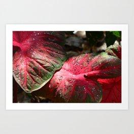 Tropical Rain - Botanical Art by Sharon Cummings Art Print
