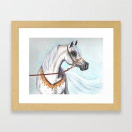 Egyptian Arabian stallion Framed Art Print
