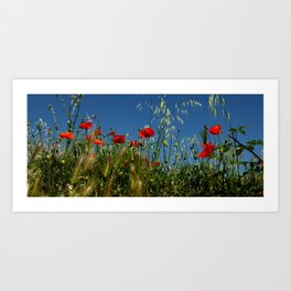 Summerfeeling Art Print