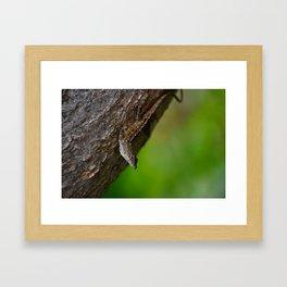 Lizard 01 Framed Art Print