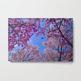 Cherry blossom explosion Metal Print