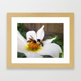 Bees at Work Framed Art Print