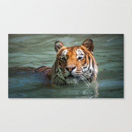 Cincinnati the Tiger in the Pool Canvas Print