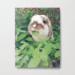 Bunny eating leaves Metal Print