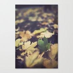 fall duet Canvas Print