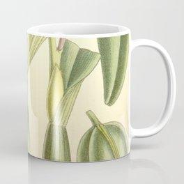 Prosthechea spondiada (as Epidendrum spondiadum) Curtis' 119 (Ser. 3 no. 49) pl. 7273 (1893) Coffee Mug
