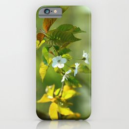 Delicate Spring Blossoms iPhone Case