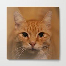Levi the Cat Metal Print