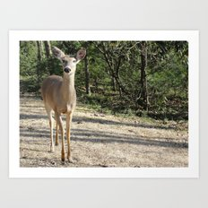Deer Sighting Art Print