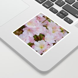 Blooming Azalea Flowers Sticker