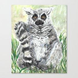 Ring-Tailed Lemur - cute animal, nature, lemur, eyeroll, zero given, not impressed, animals Canvas Print