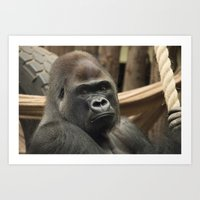 gorilla Art Prints featuring Gorilla  by Rob Hawkins Photography